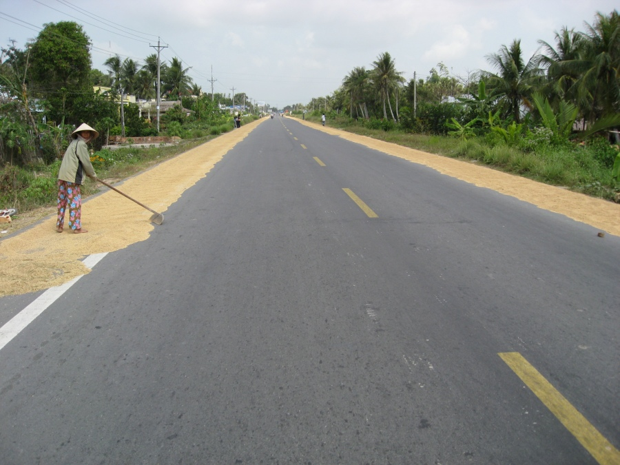 Drying rice on asphalt