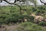 Landscape at Lake Manyara