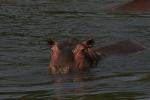 Hippo !